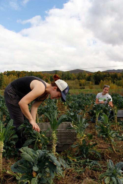 Healthy Roots Collaborative in Vermont worked with ten farms and gleaned over 10,600 pounds of produce